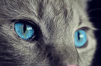 Can your pet sense extraterrestrials?
